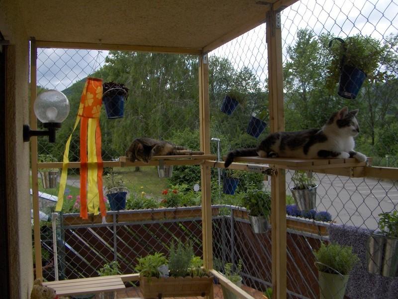 katzen suchen ein zuhause katzen aus reutlingen katzen aus hechingen do it your self ideen. Black Bedroom Furniture Sets. Home Design Ideas